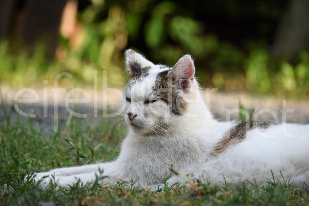 Siesta | Katze beim Mittagsschlaf