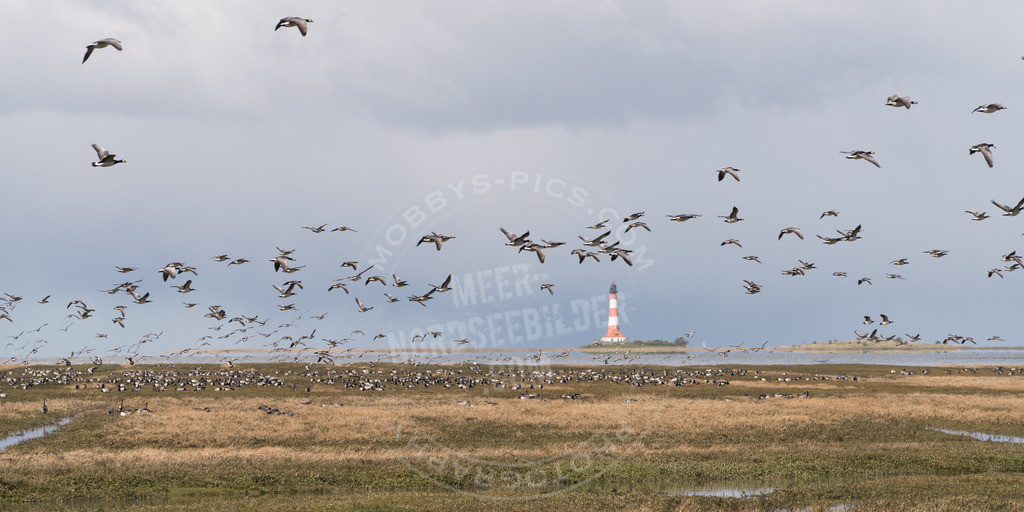 _DSC1644 | Die Vögel am Turm