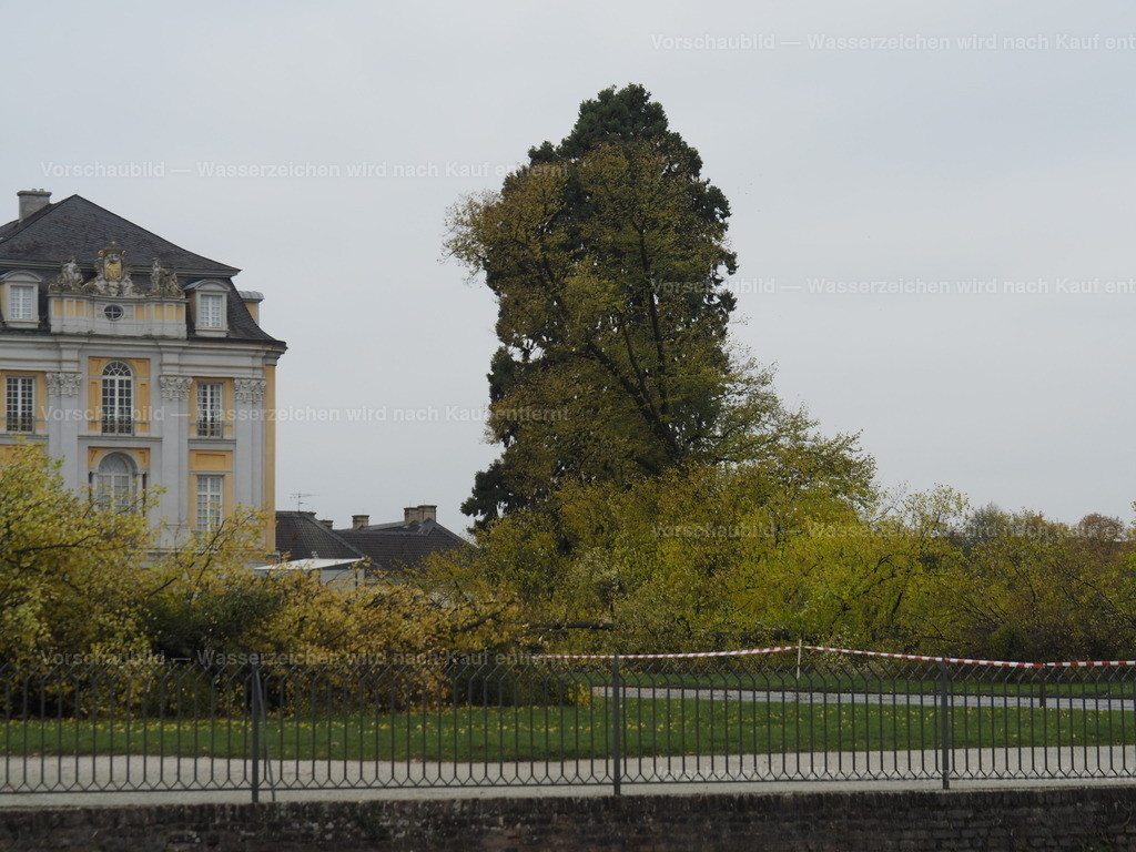Last tree falling (7/10)
