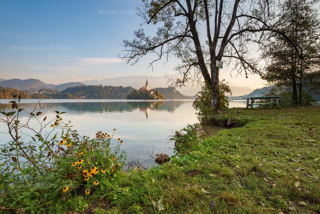Morgens am Bleder See | Morgenstimmung am Bleder See in Slowenien im Herbst.