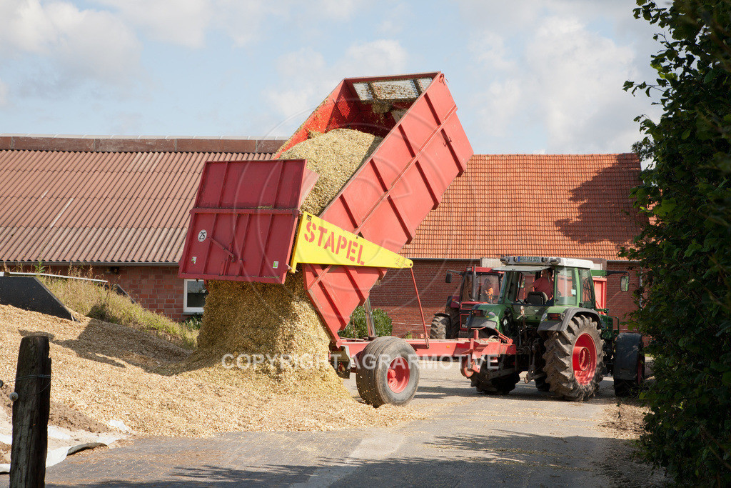 20080914-IMG_9088 | Silomais wird gehäckselt - AGRARFOTO Bilder aus der Landwirtschaft