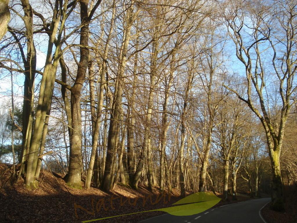 Baumvolle Straße