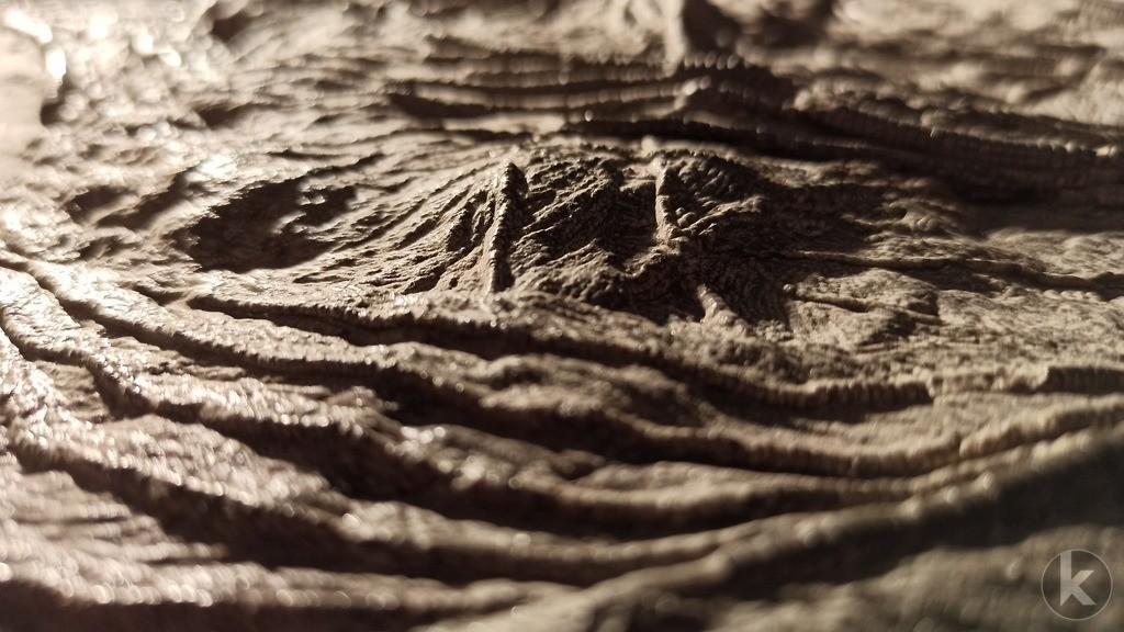Crinoidea 3 | Künstlerische Nahaufnahme einer fossilen Seelilie