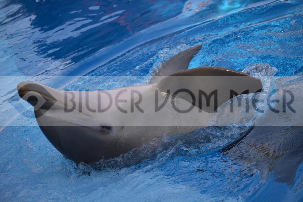 Delfin Bilder    Foto verspeilter Delfin 3 Spanien