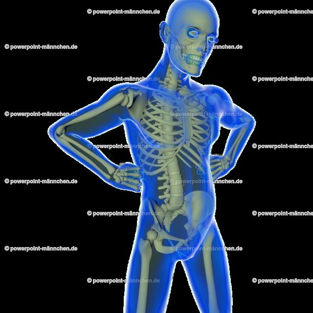 transparent man where to see the skeleton | Quelle: https://3dman.eu   Jetzt 250 Bilder kostenlos sichern