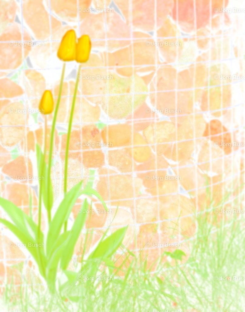 Blume am Brunnen_1_Aquarell