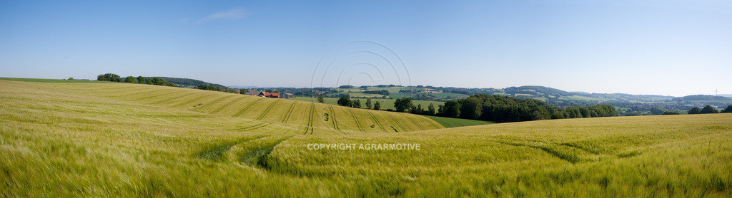 20090530-IMG_2135_panorama | Gerstenfeld im Frühling - AGRARFOTO Bildagentur