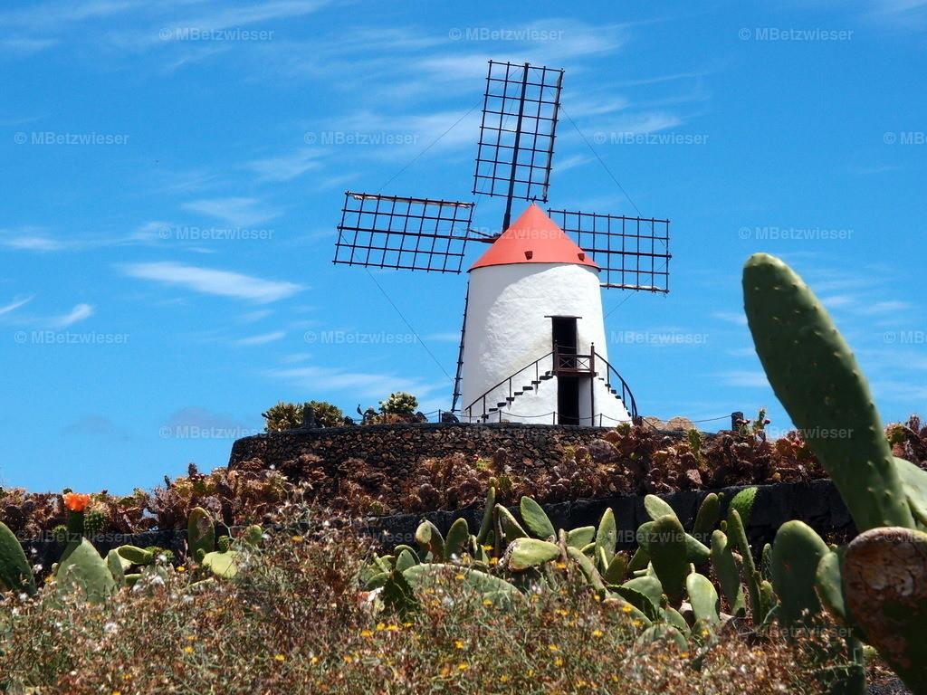 P5061151 | Kaktusgarten von Cesar Manrique