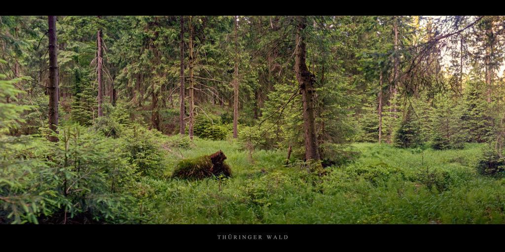 Thüringer Wald   Nadelwald mit Moor im Thüringer Wald