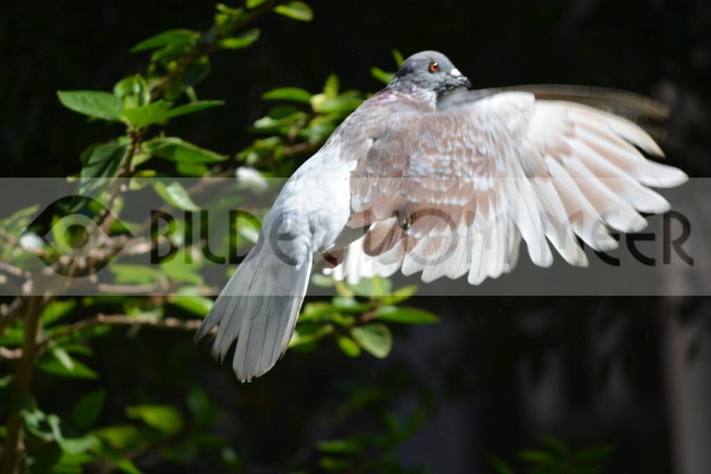 Fotoausstellung Meer Bilder    Taubenflug im Garten der Kathedrale von Malaga