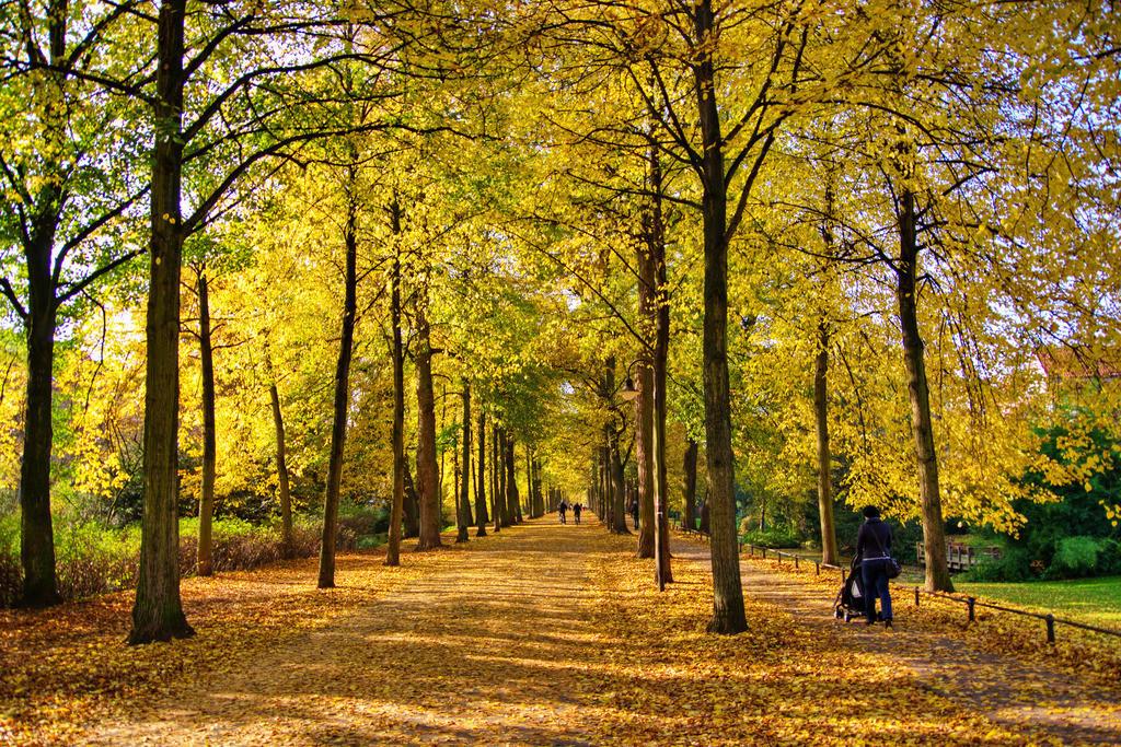 Promenade im Herbst mit Laub in Münster   Herbstliche Promenade in Münster Westfalen mit viel Herbstlaub in Goldfarbenem Licht durch ein schönes Spiel von Sonne und Schatten