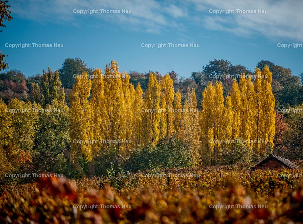 10_Oktober_Herbst-4 | Bild: Thomas Neu