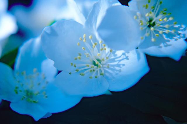 Freunde 11 | Blüten