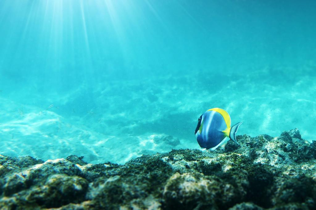 109-Seychellen-Fisch