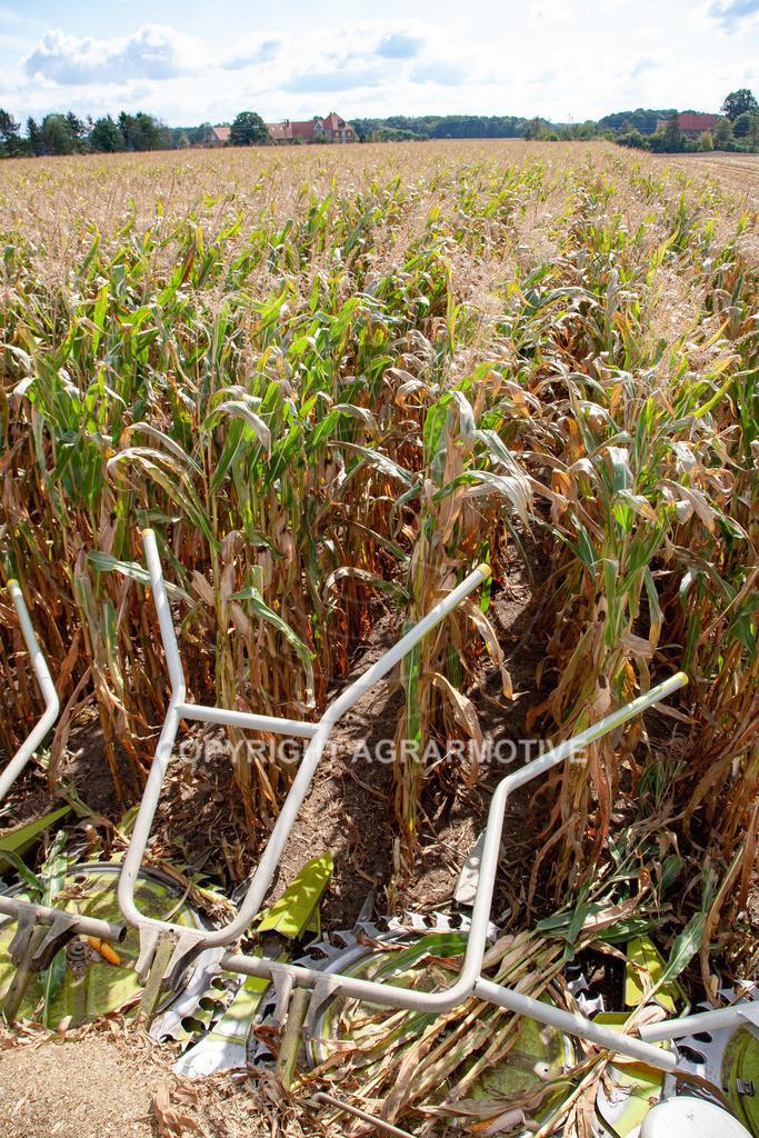 20080914-IMG_9029 | Silomais wird gehäckselt - AGRARFOTO Bilder aus der Landwirtschaft