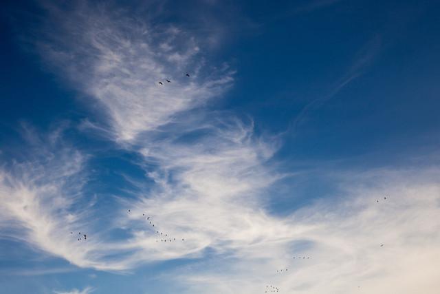 Cirruswolken, blauer Himmel und ziehende Wildgänse | Blick in den Himmel am Quitzdorfer Stausee, Beobachtung von ziehenden Wildgänsen vor dem blauen Himmel mit Cirruswolken