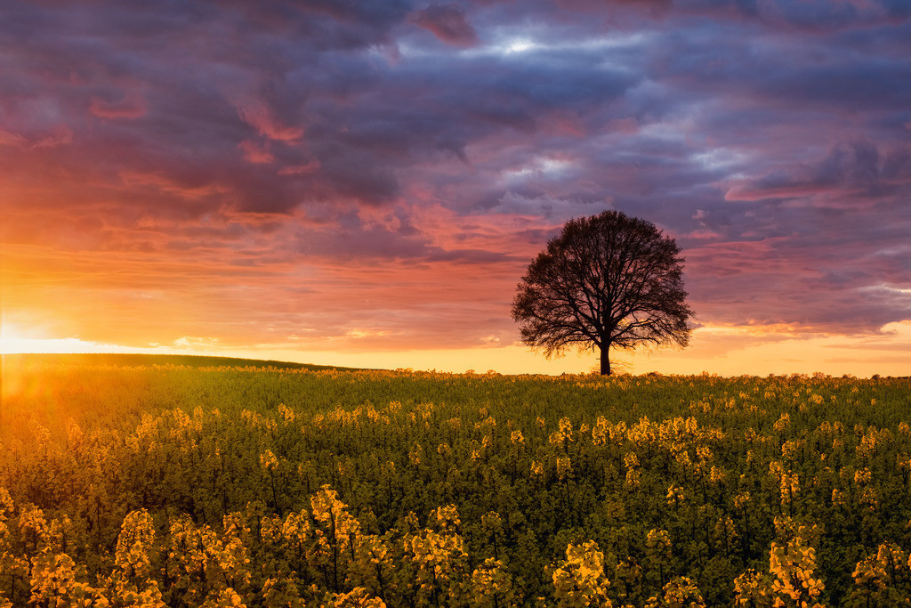 Rapsody IV | Raps und Baum und Himmel