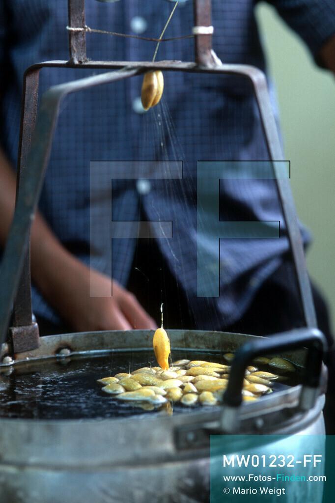 MW01232-FF   Kambodscha   Siem Reap   Reportage: Seidenherstellung   Der Faden des Kokons wird durch 60 Grad warmes Wasser getrennt und aufgewickelt. Die Fäden werden damit von mehreren Kokons zu einem stärkeren Faden gespult.  ** Feindaten bitte anfragen bei Mario Weigt Photography, info@asia-stories.com **