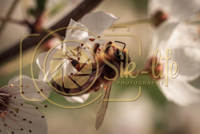 Fleißiges Bienchen 1