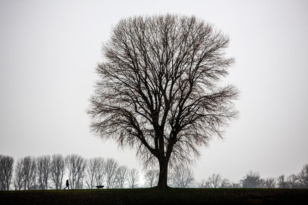 JT-130225-023 | Tristes Winterwetter, Nebel, kahle Bäume, Rheindamm bei Düsseldorf-Stockum. Mann mit Hund beim Spaziergang.