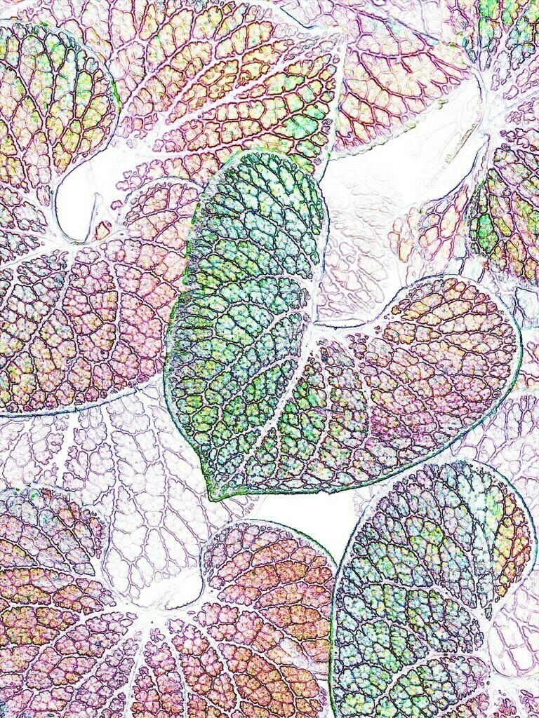 silberblatt-topaz-colored pencil hardII