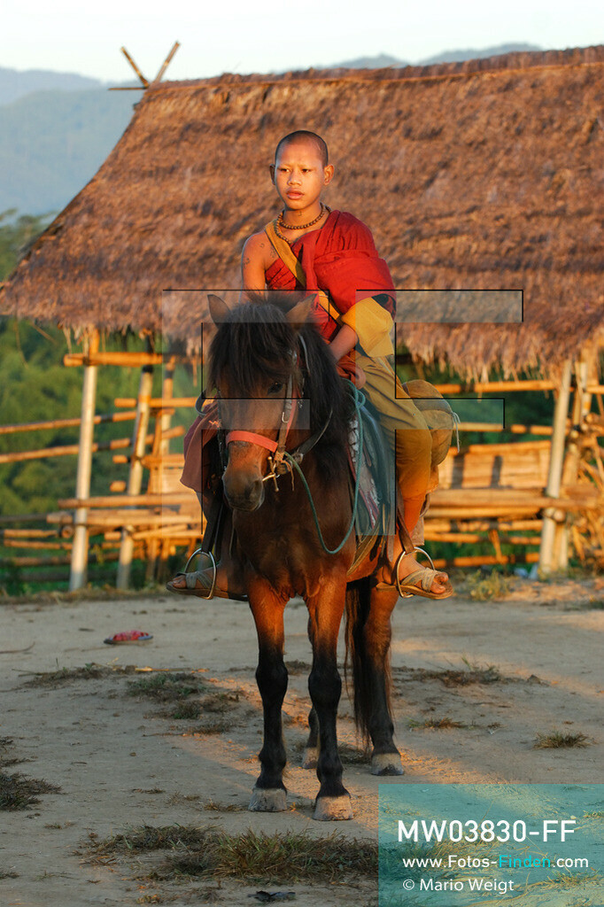 MW03830-FF   Thailand   Goldenes Dreieck   Reportage: Buddhas Ranch im Dschungel   Novize Pansaen auf einem Pferd der älteren Mönche  ** Feindaten bitte anfragen bei Mario Weigt Photography, info@asia-stories.com **