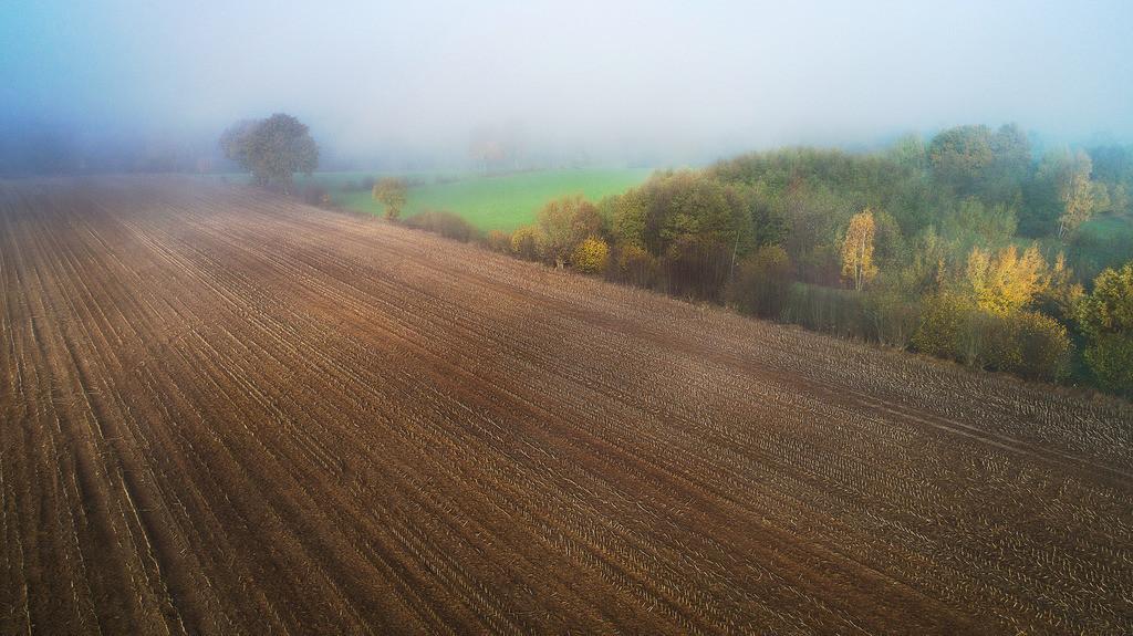 Novemberfeld | Stoppelacker mit Knicklandschaft, Nähe Hohe Leuchte, Grönwohld, Stormarn