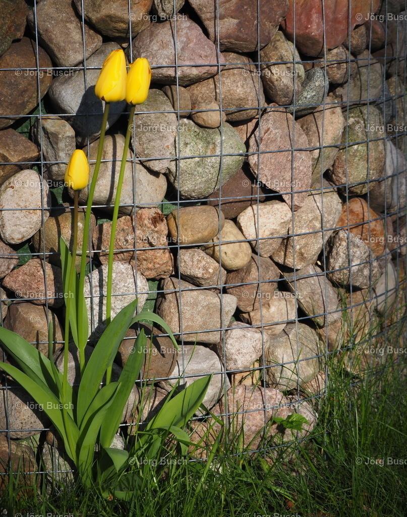 Blume am Brunnen_1