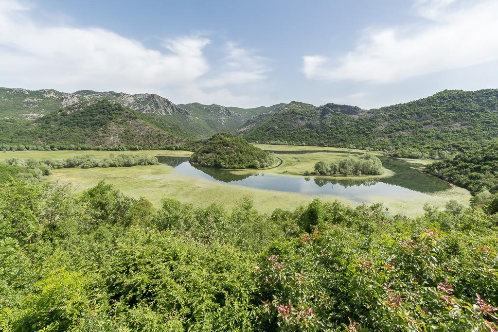Seerosenfelder am Moracafluss (Montenegro)