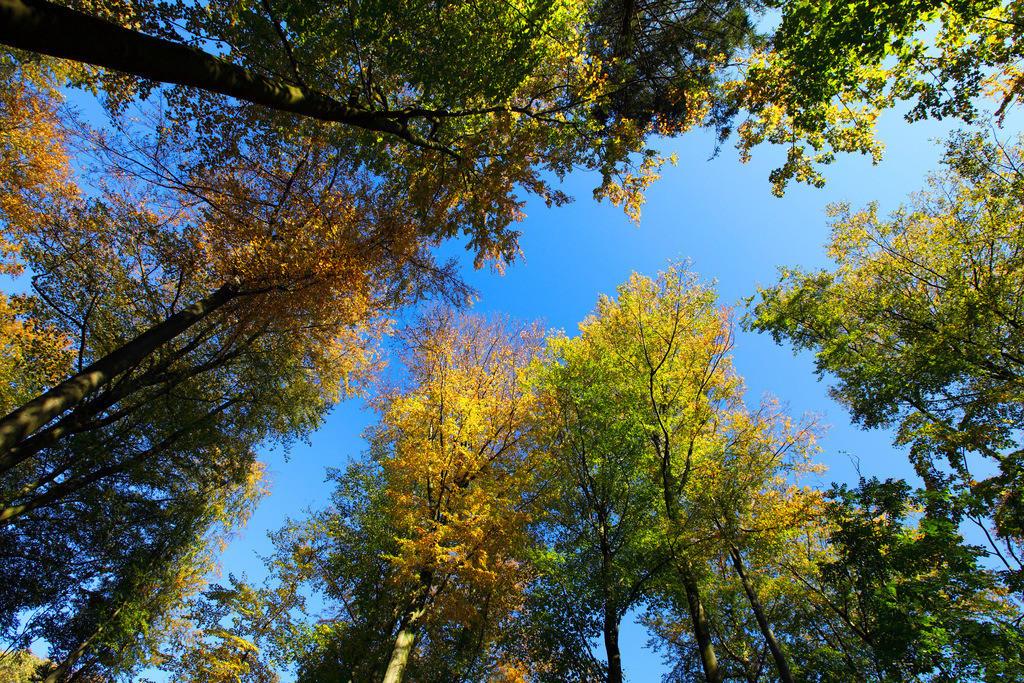 JT-111023-608 | Wald, Laubbäume im Herbst.