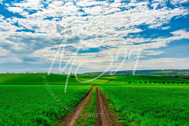 Wanderung - Talsperre Dachwig   Feldweg inmitten grüner Felder - Blick Richtung Witterda, Wanderrichtung Kleinfahner
