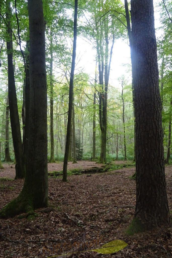 Lichtherz im Zauberwald