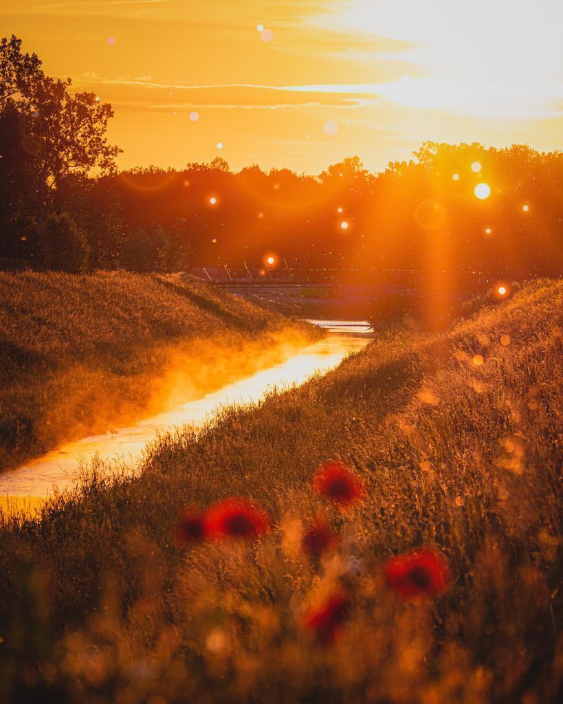 Sommer im Ried | Sommerliche Abendstimmung im Ried