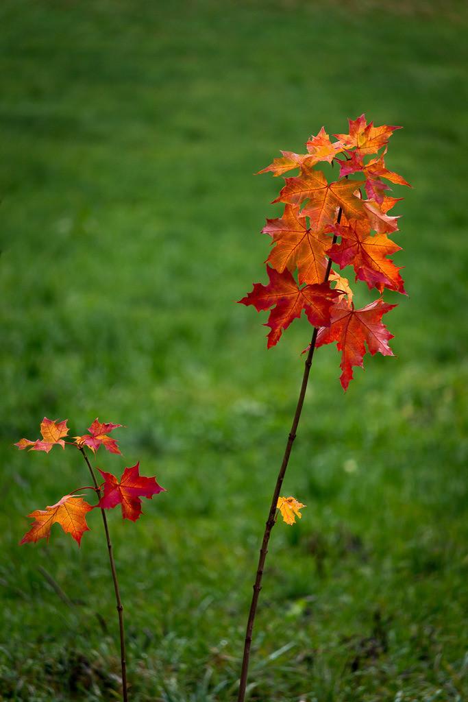Kleines Bäumchen im Herbst
