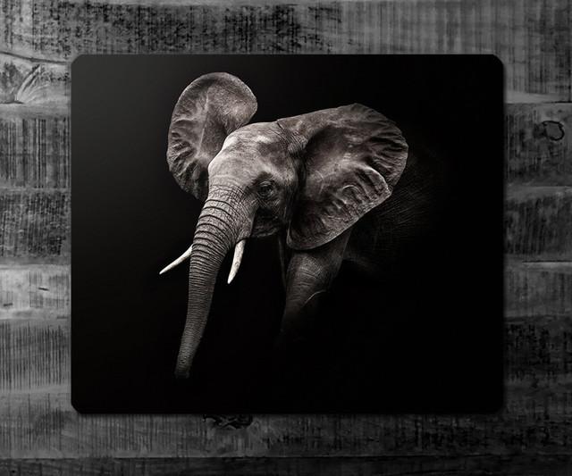 LITTLE ELEPHANT fineArt | Kenya