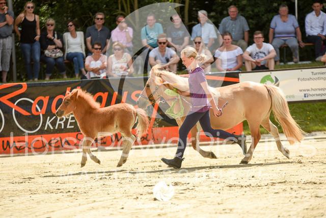 RFV Ochtrup - Fohlenparade-0965