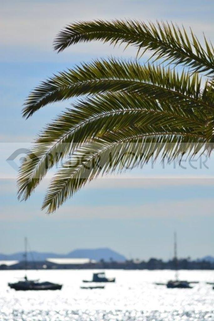 Bilder vom Meer | Palmwedel über dem Meer