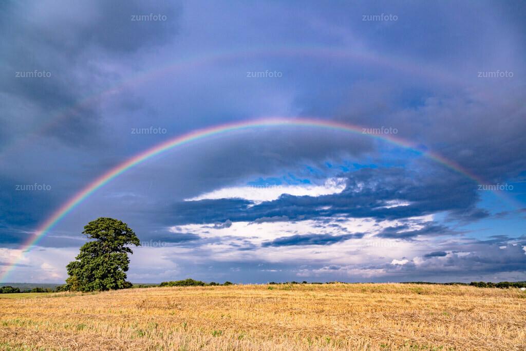 0-140818-7754 | --Dateigröße 5760 x 3840 Pixel-- Regenbogen über abgeärntetem Getreidefeld mit einer Eiche.