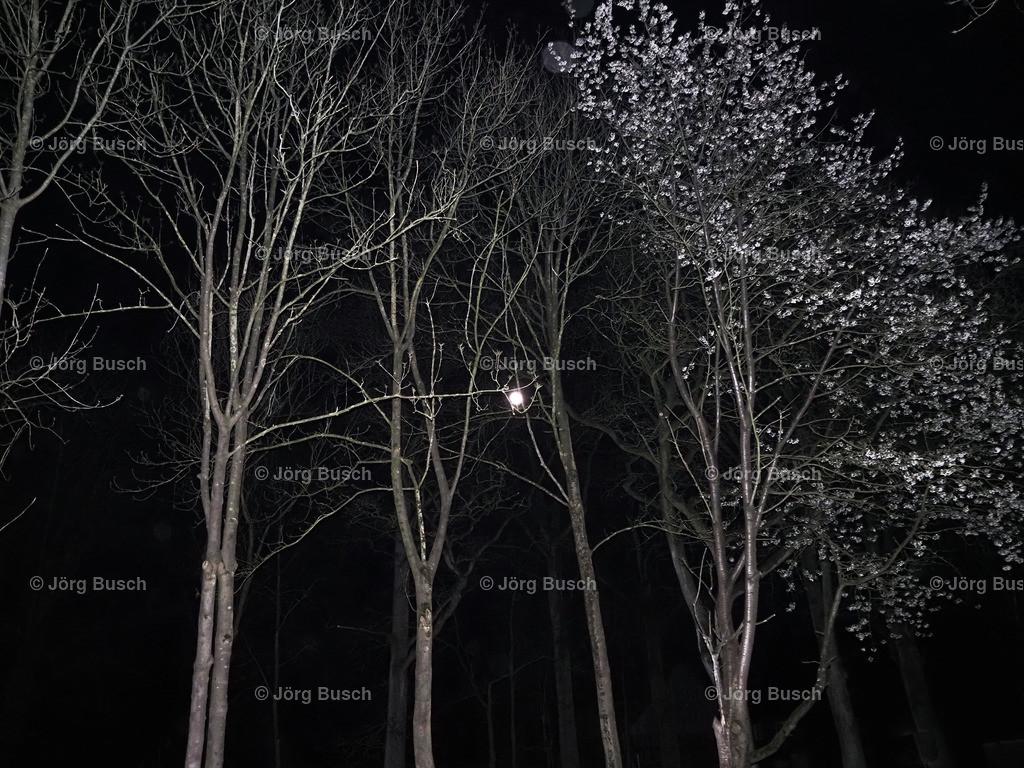 Bäume_02