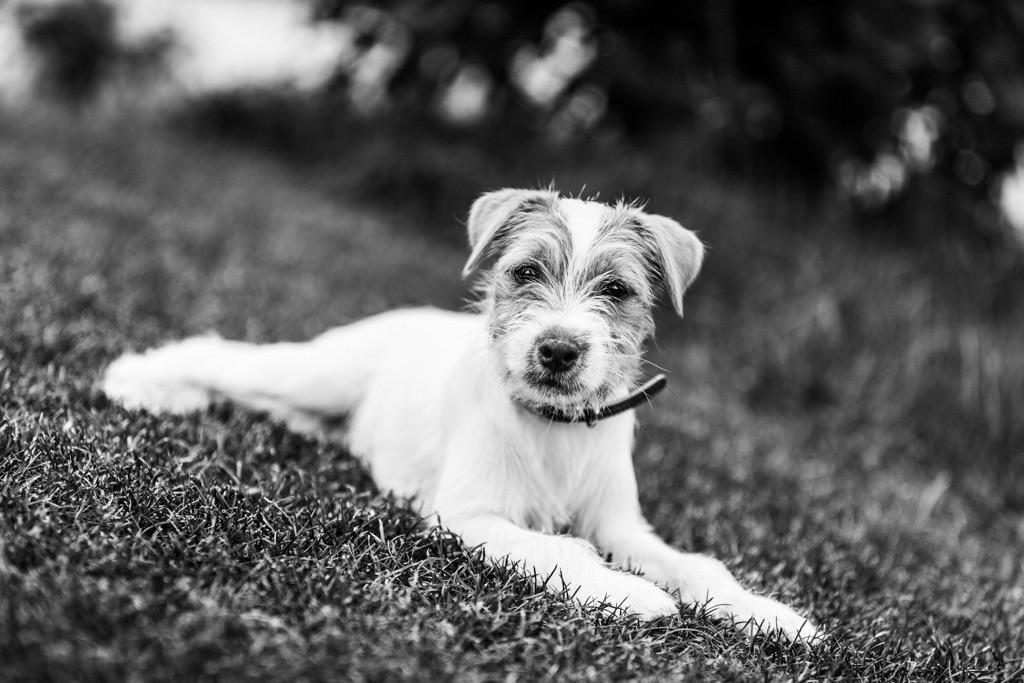 dogs--elmar.pics_5560