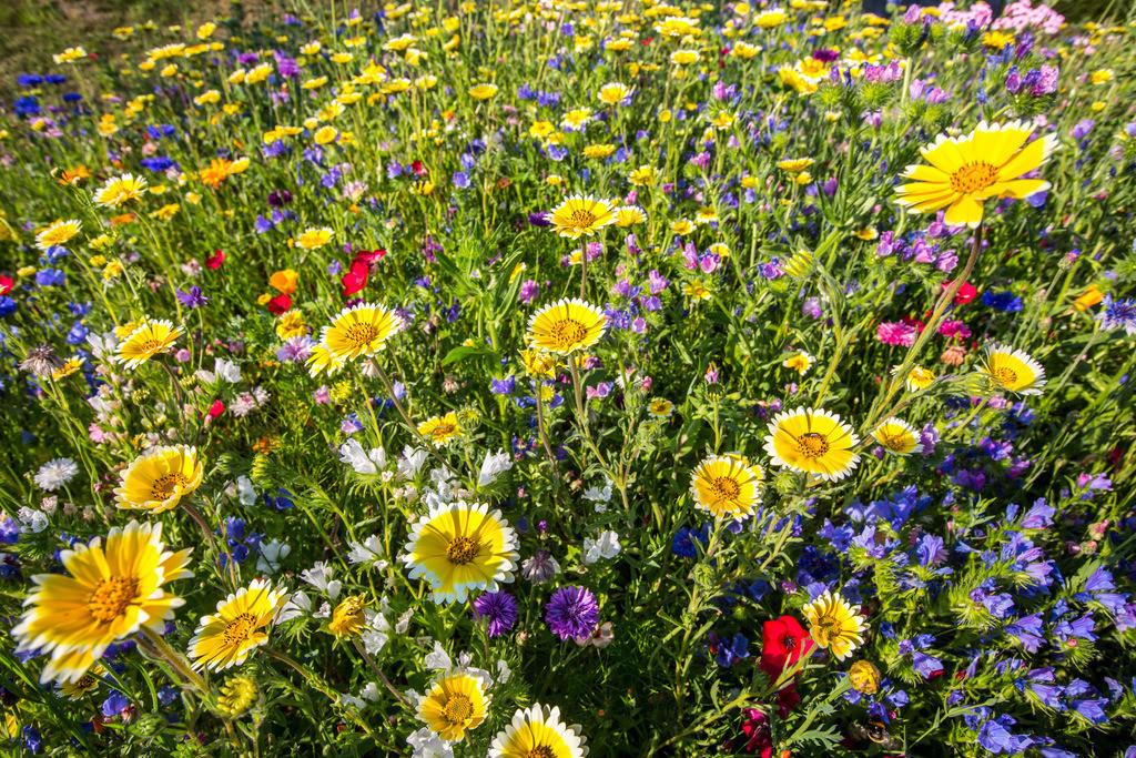 JT-130814-309   Wilde Blumenwiese mit vielen verschiedenen bunten Blumen und Pflanzen.