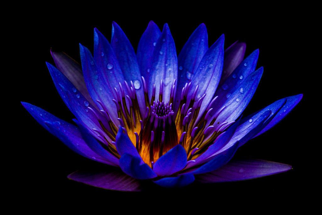 Traum der Biene | Blumen sind die Liebesgedanken der Natur. Bettina von Arnim