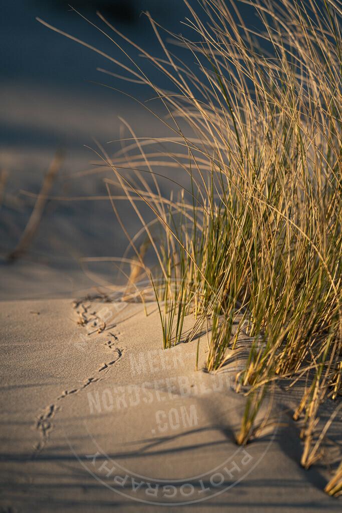 _MGB3139 | Deine Spuren im Sand