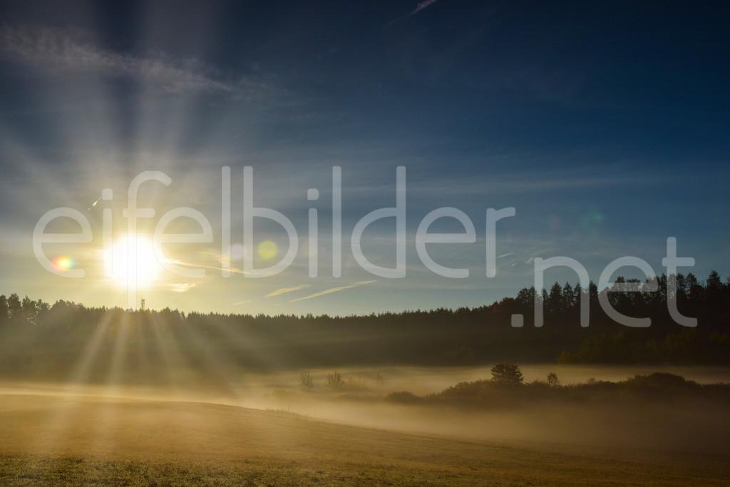 goldener Morgen - Sonne trifft Nebel | Morgenstund hat Gold im Mund ... fotografiert in Daun Schalkenmehren, Vulkaneifel