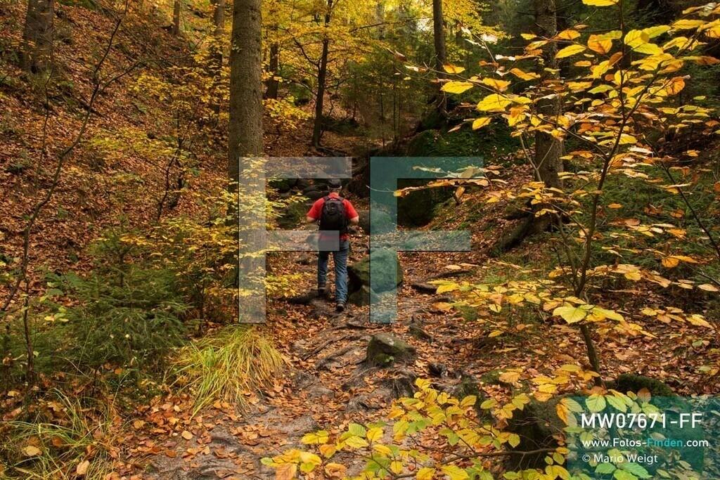 MW07671-FF | Deutschland | Sachsen | Sächsische Schweiz | Eulentilke, eine Schlucht mit Felsen und Buchen, im Herbst. Der Wanderweg liegt zwischen dem Nassen Grund und der Wilden Hölle, die zum beliebten Aussichtspunkt Carolafelsen führt.  ** Feindaten bitte anfragen bei Mario Weigt Photography, info@asia-stories.com **