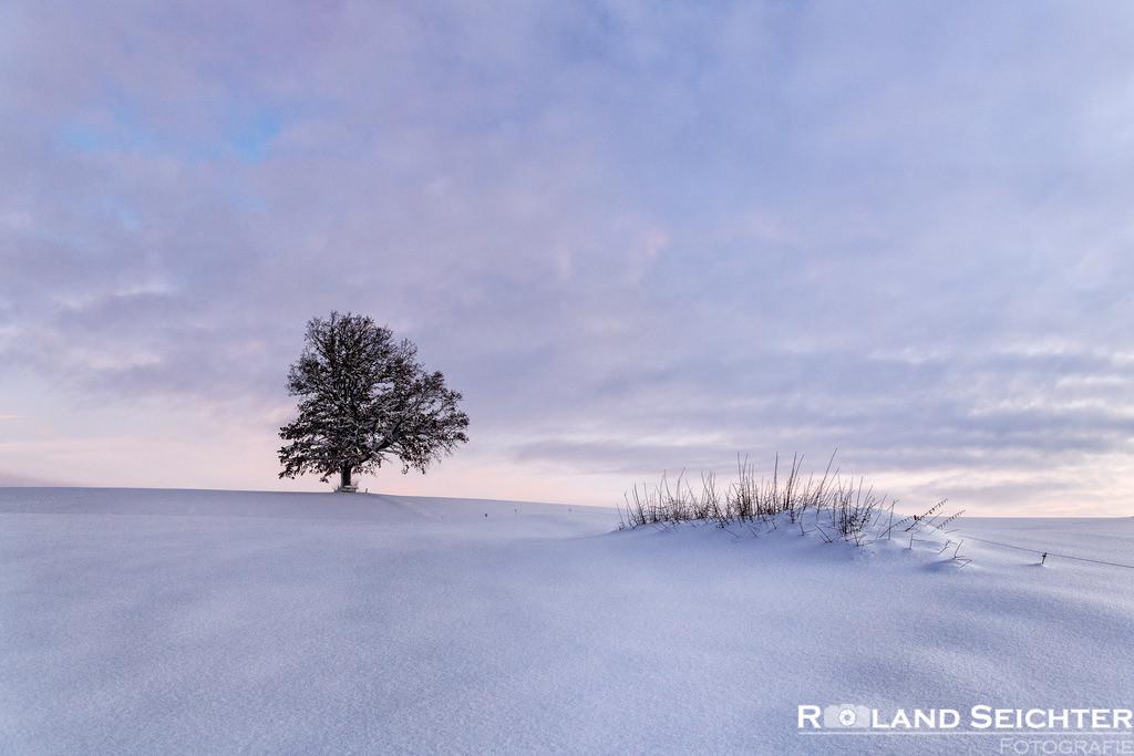 Winterbaum im Allgäu | Kalenderblatt Januar