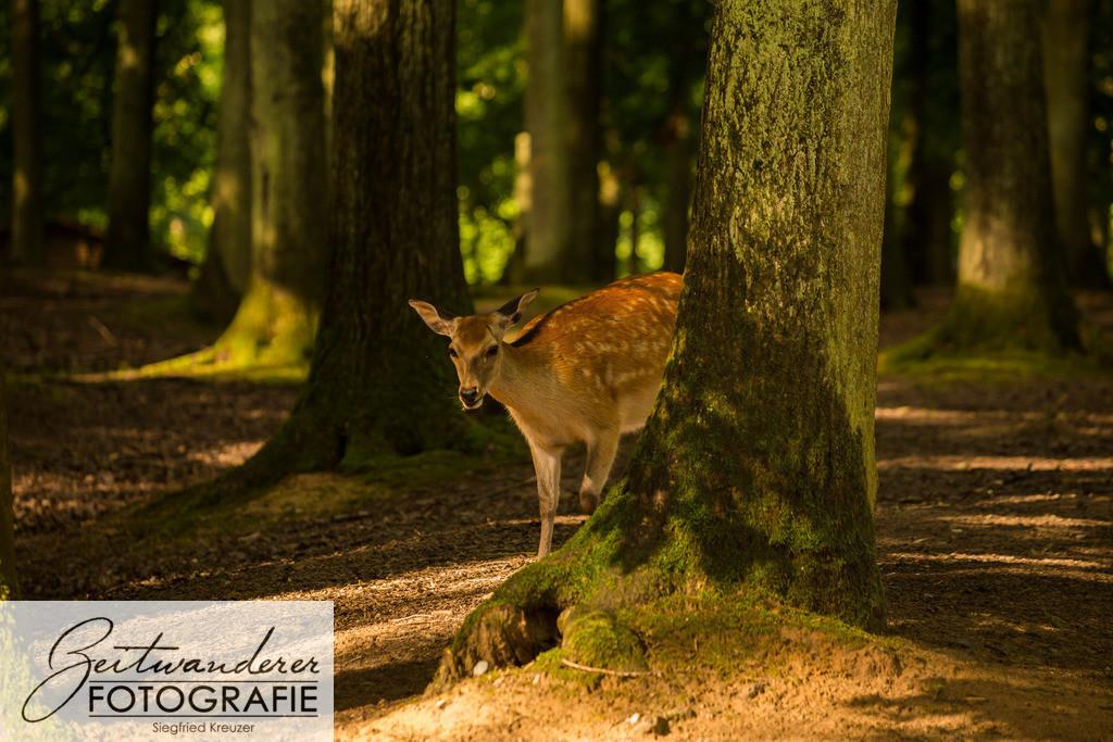 Reh hinter Baum
