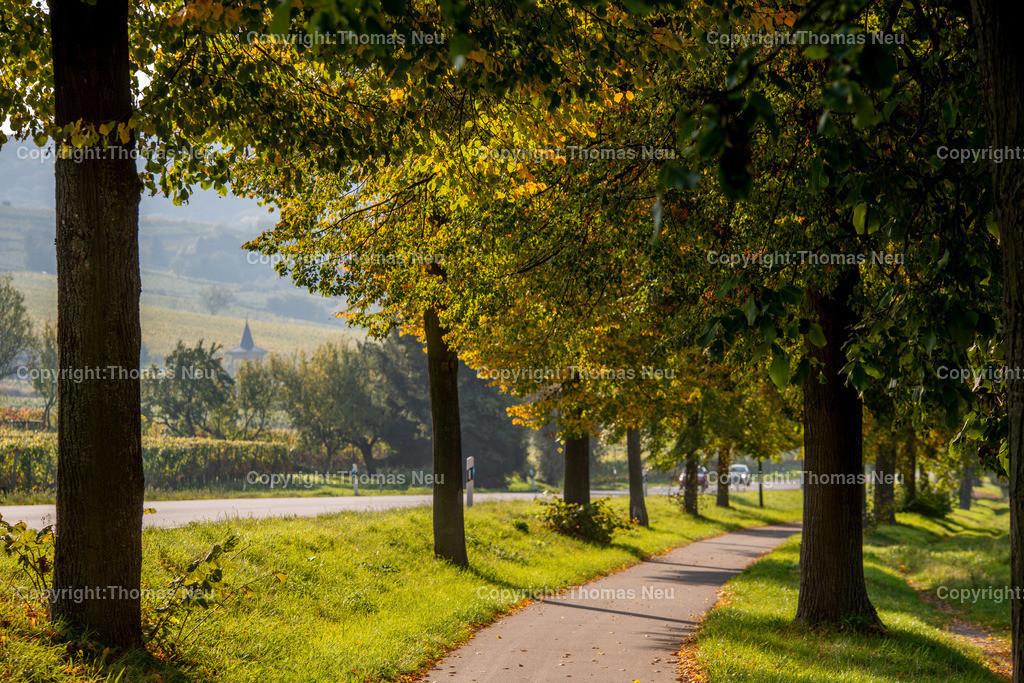 Radweg | ,, Bild: Thomas Neu