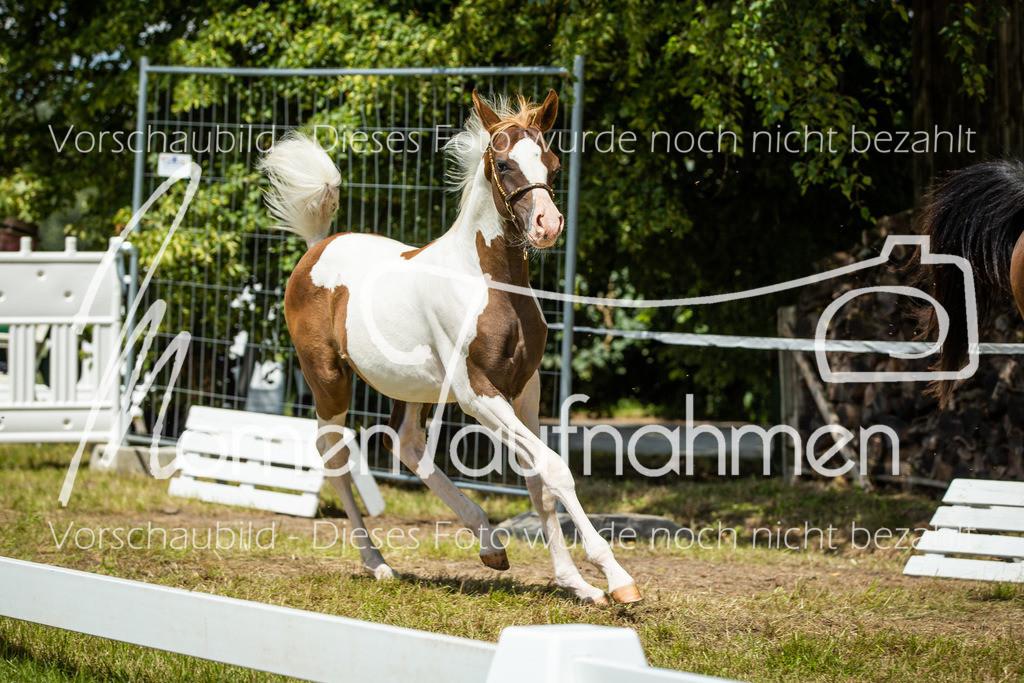 Sonstige Rassen-Fohlen-04