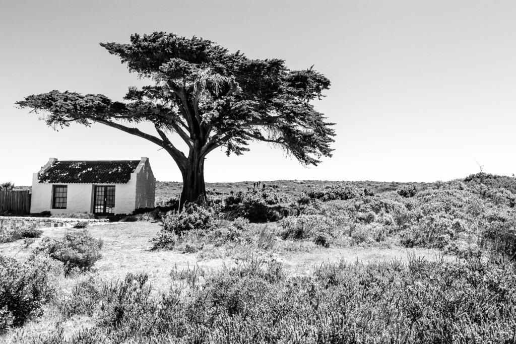 Print Südafrika - 008